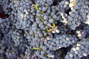 Famiglia Buccelletti | Winery